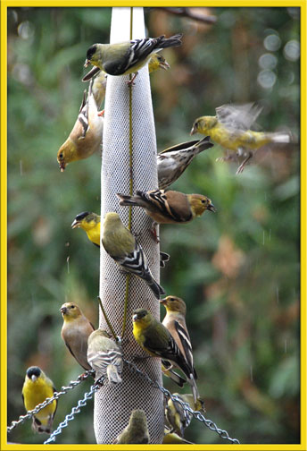 01_22_birds