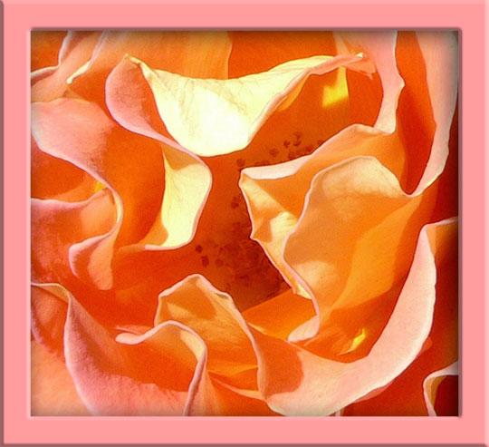 06_02_rose