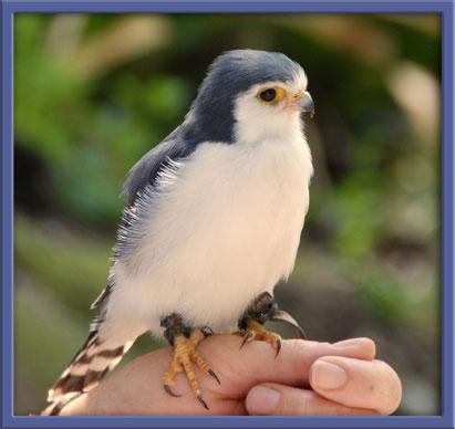 06_19_falcon