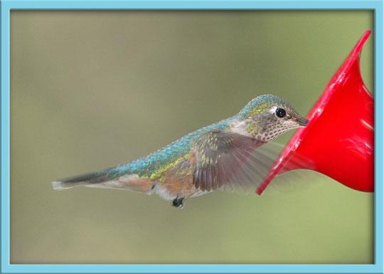 09_15_hummingbird