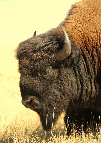 09_20_buffalo