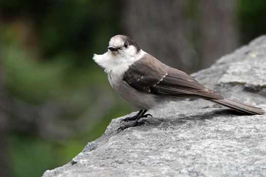 11_18_bird