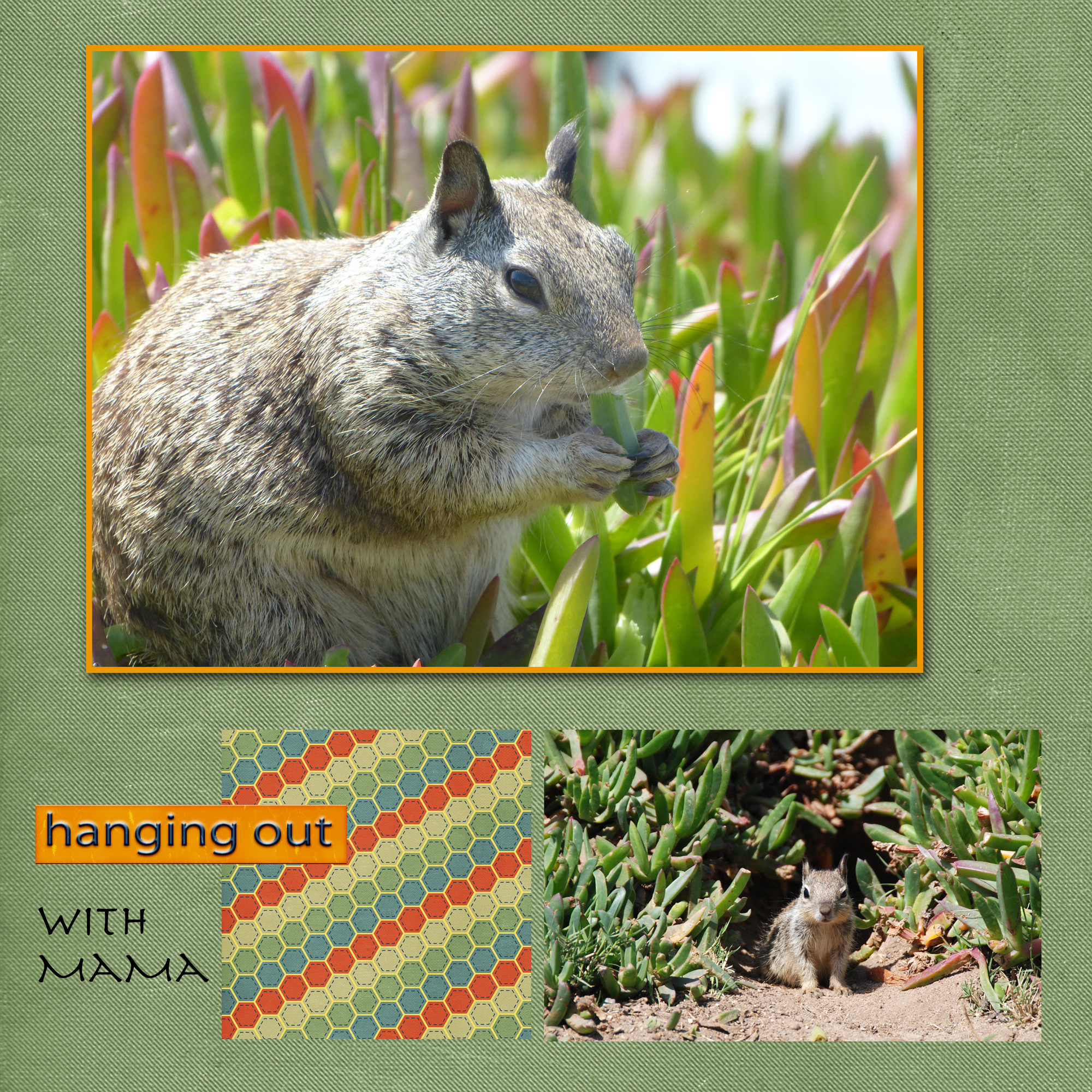 ground_squirrel