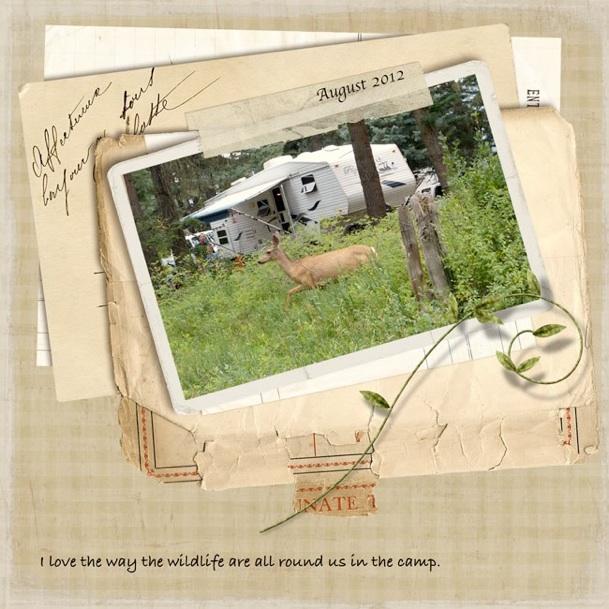 web_camp_deer