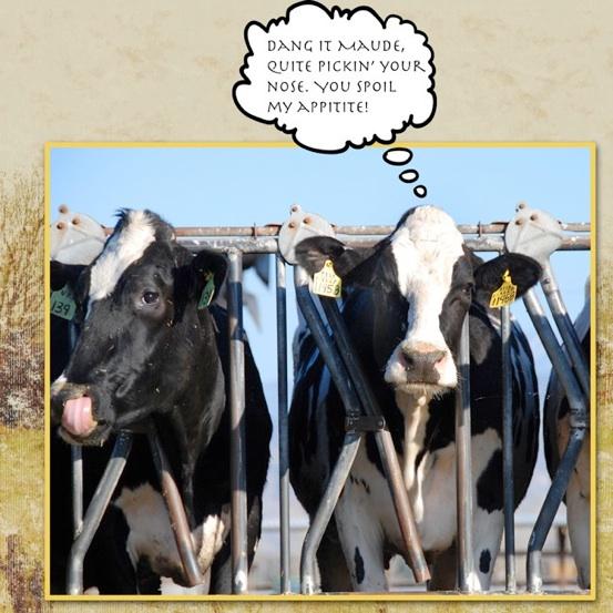 web_cow_pickin