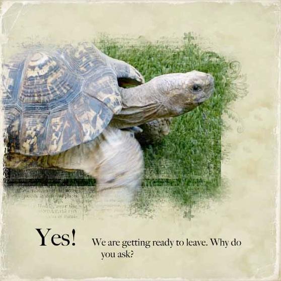 web_turtle