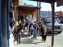 01_02_oatman-burros