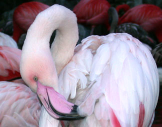 01_25_flamingo2