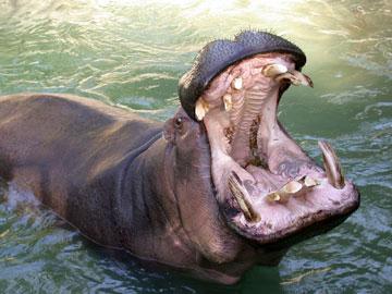 01_25_hippo