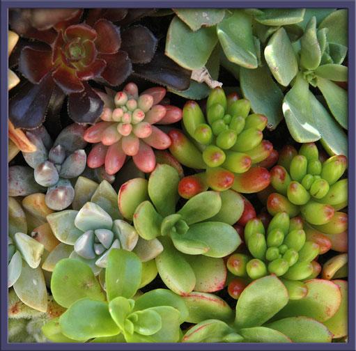 06_22_succulents