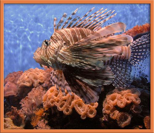07_06_lionfish