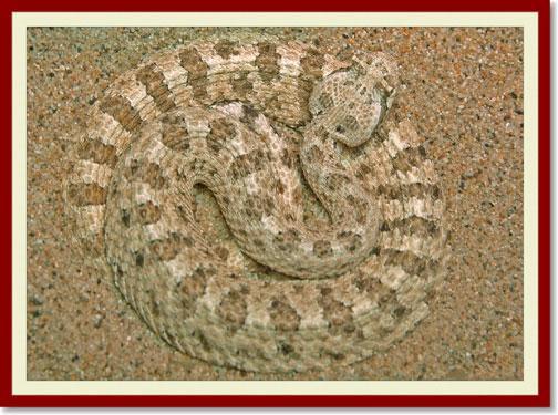 07_09_snake