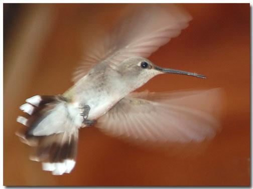 07_24_hummingbird