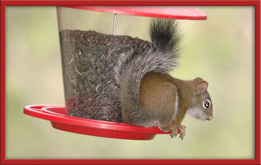 07_28_squirell