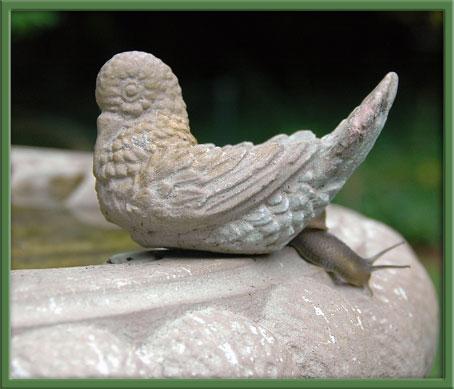 07_31_snail
