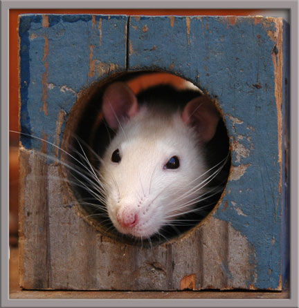 08_26_mouse