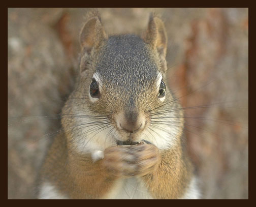 08_27_squirrel