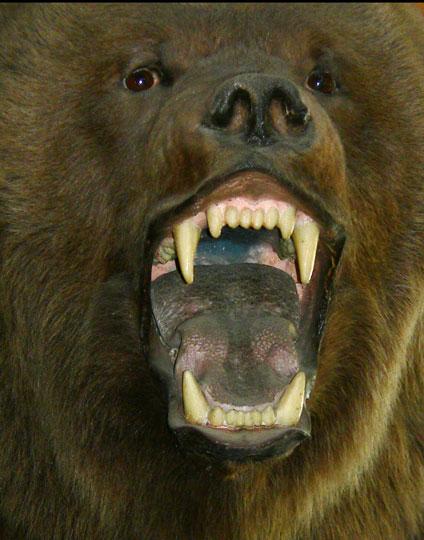 08_31_bear