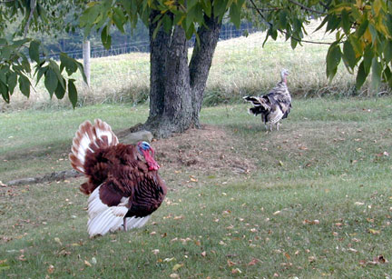 09_19_turkey