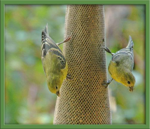 09_30_birds