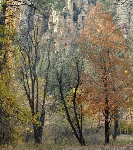 10_29_trees2