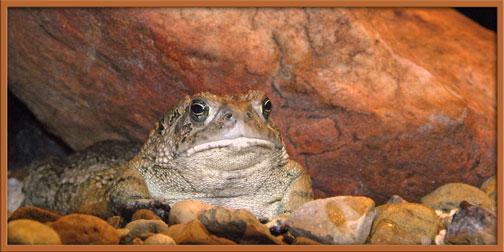 10_30_bullfrog