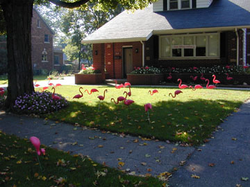 10_5_flamingos