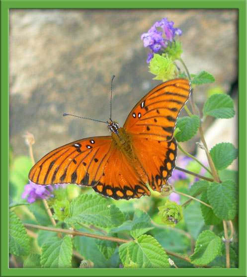 11_03_butterfly