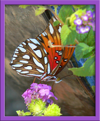 12_08_butterfly