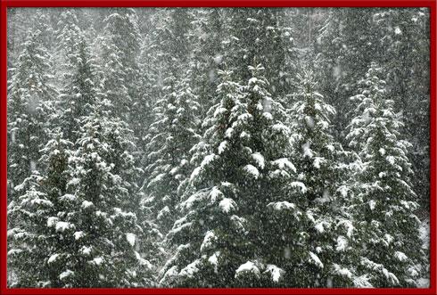 12_21_snow