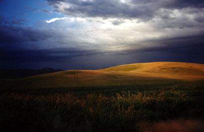 7_29_wheat_fields