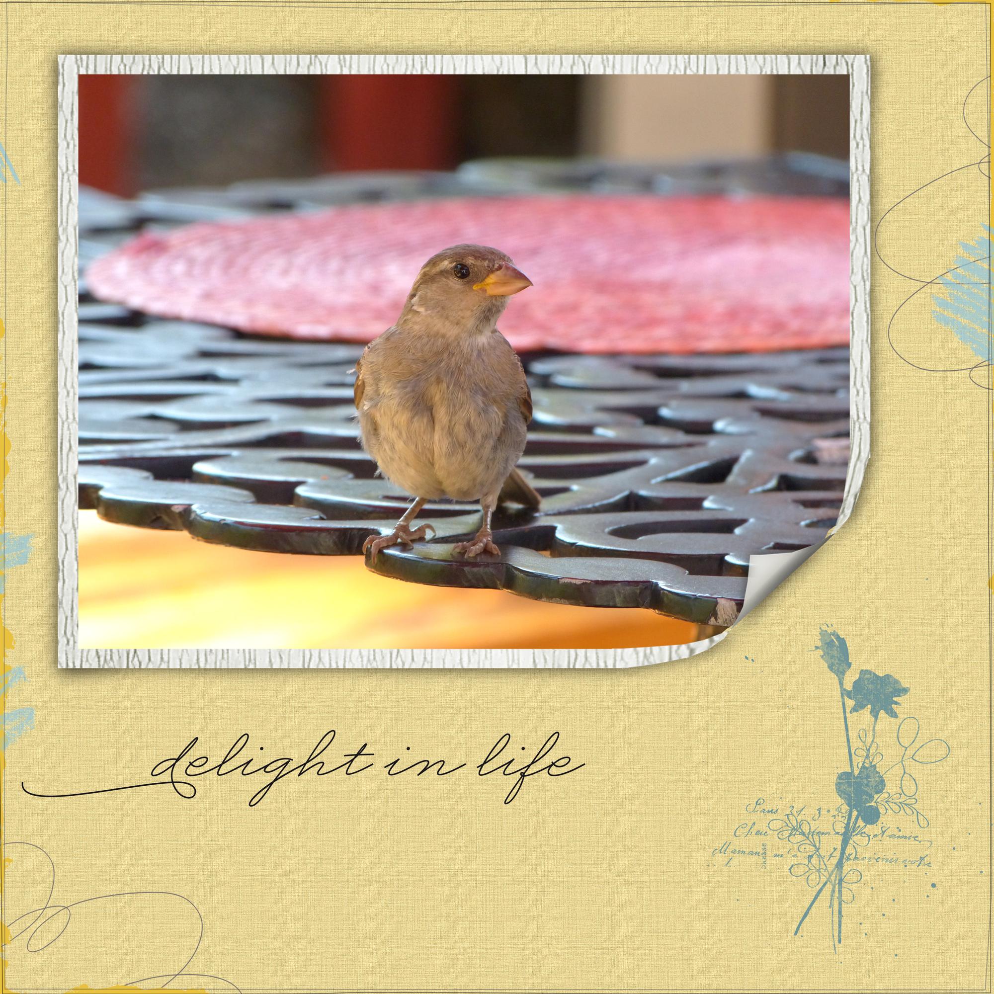 bird_edited-1