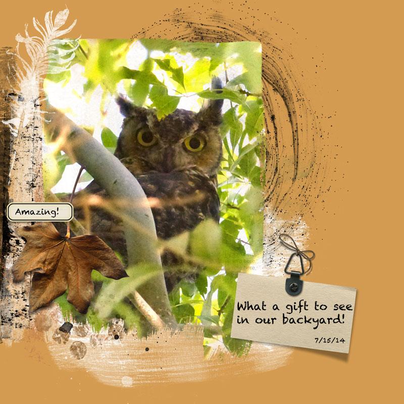 horned_owl