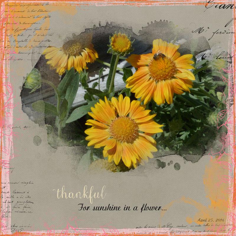 sunshine_flower