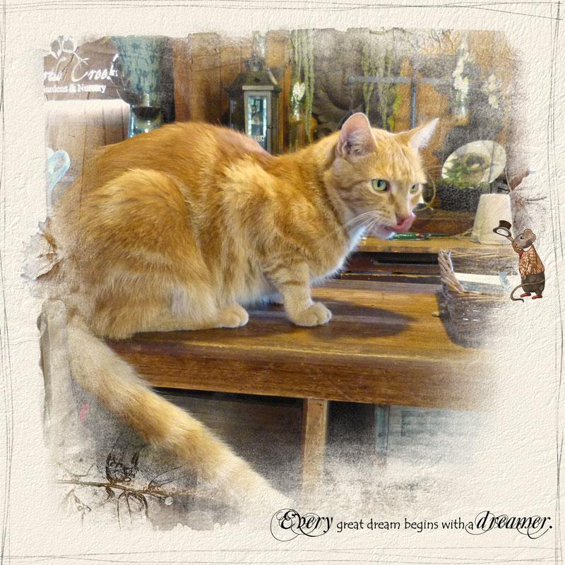 cat_mouse2