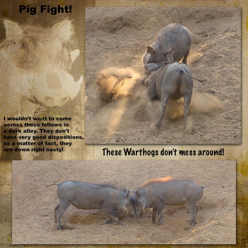 pigs_mean2